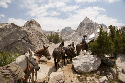 Photo: A horse and rider lead a string of pack animals in King's Canyon National Park, California, USA.