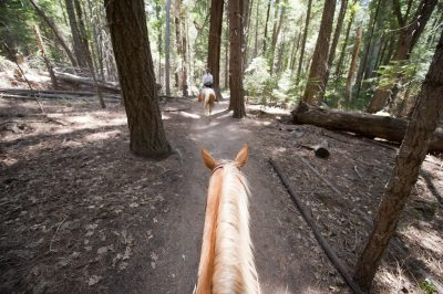 Photo: Horses are ridden through King's Canyon National Park.