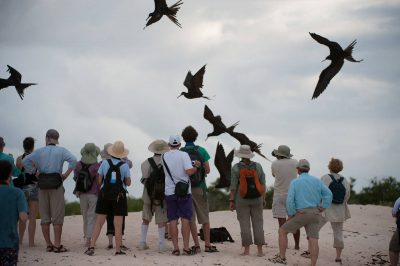 Photo: Tourists watch great frigatebirds (Fregata minor) in Galapagos National Park.