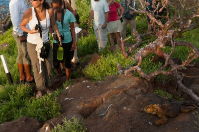 Photo: Tourist encounter a Galapagos Land Iguana (Conolophus subcristatus) on North Seymour Island, part of Galapagos National Park.
