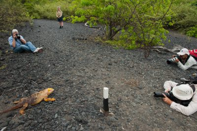 Photo: Tourists stop to photograph a Galapagos land iguana (Conolophus subcristatus) on Urbina Bay, Isabela Island in Galapagos National Park.