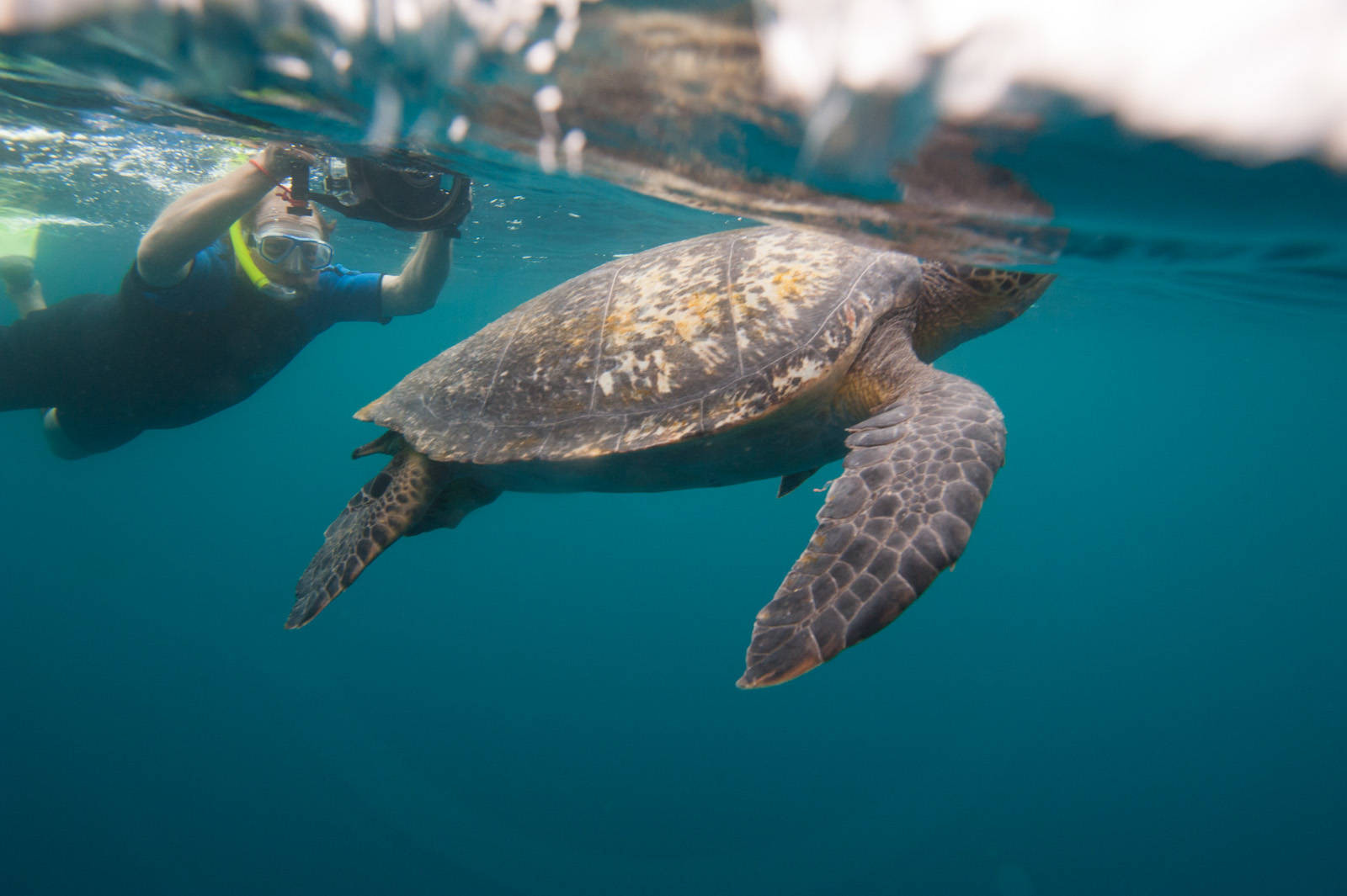 A man shoots an underwater picture of a green sea turtle (Chelonia mydas) around 'Kicker Rocks' on the edge of San Cristobal Island. (IUCN: Endangered; US: Endangered)