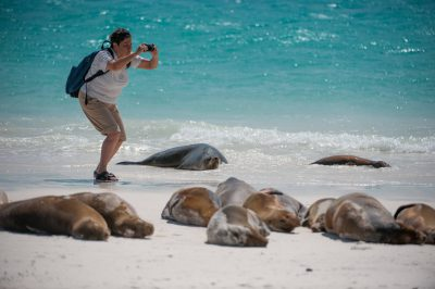 Photo: A tourist photographs Galapagos sea lions (Zalophus wollebaeki) on Espanola Island in Galapagos National Park.