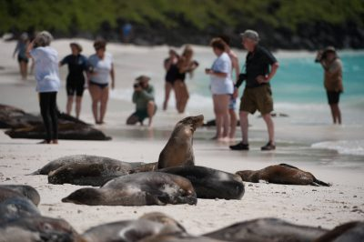 Photo: Tourist walk among the Galapagos sea lions (Zalophus wollebaeki) on Espanola Island in Galapagos National Park.
