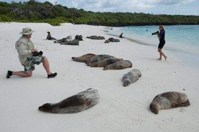 Photo: Photo opportunities are found amongst the Galapagos sea lions (Zalophus wollebaeki) on Espanola Island in Galapagos National Park.
