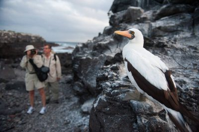 Photo: Tourists photograph a Nazca booby (Sula granti) in a nesting colony on Espanola Island in Galapagos National Park.