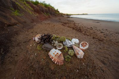 Photo: Shells along the beach on Floreana Island in Galapagos National Park.