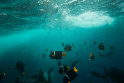 Photo: Ocean fish by Floreana Island in Galapagos National Park.