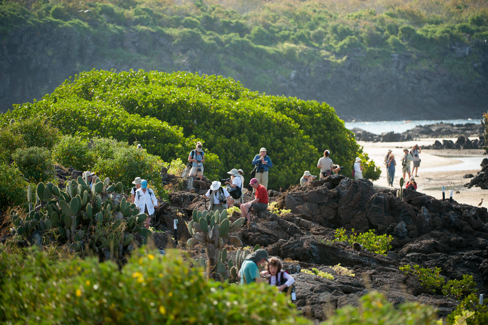 Photo: Tourists walk along a wildlife viewing path along the shore of Tower Island in Galapagos National Park.
