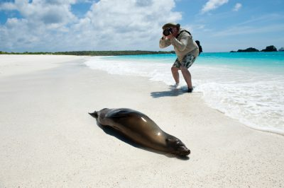 Photo: An endangered Galapagos sea lion, Zalophus wollebaeki, on the beach at Espanola Island in Galapagos National Park.