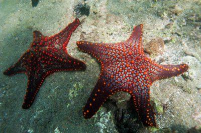 Photo: Starfish in the Galapagos Islands.
