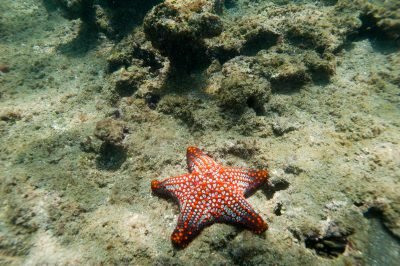 Photo: Starfish in the Galapagos Islands.