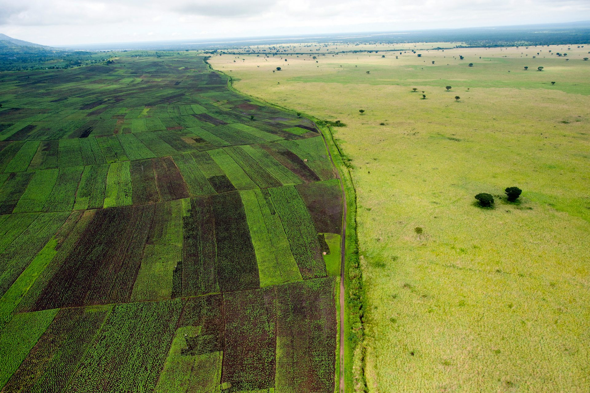 Photo: Agricultural plots meet Queen Elizabeth National Park at the base of the Ankole Hills.