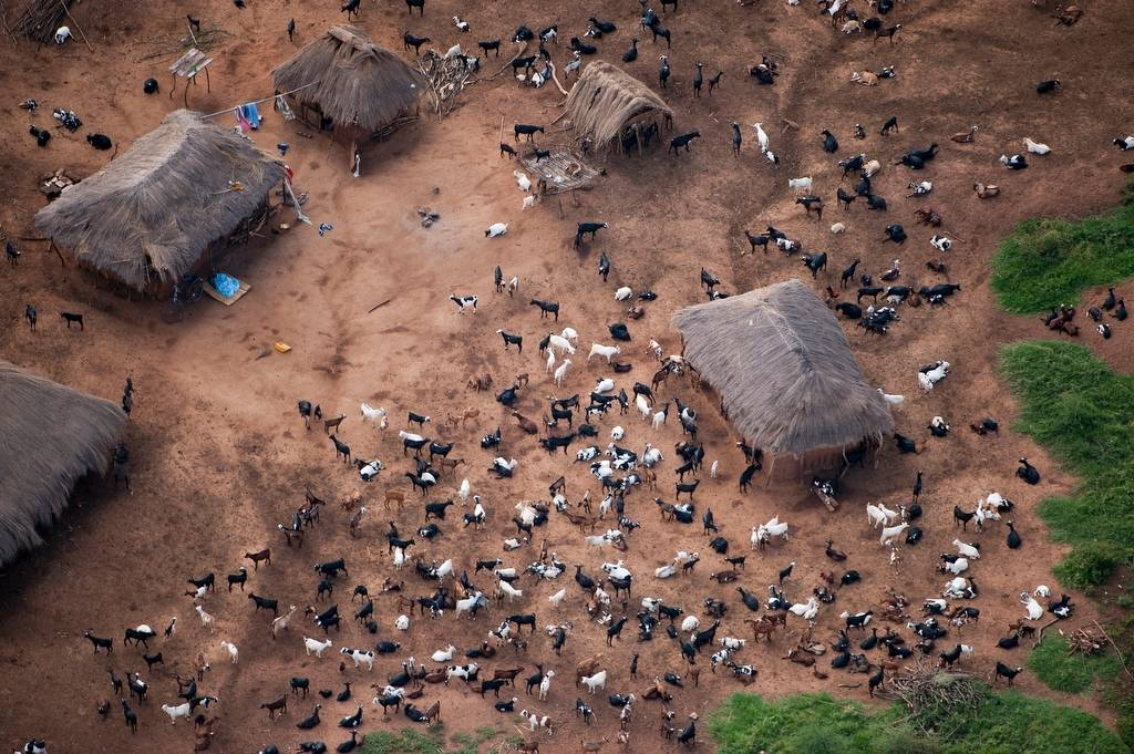 Photo: Along the eastern side of Lake Albert, overnighting goats represent the pressure that increasing human populations have on the land.