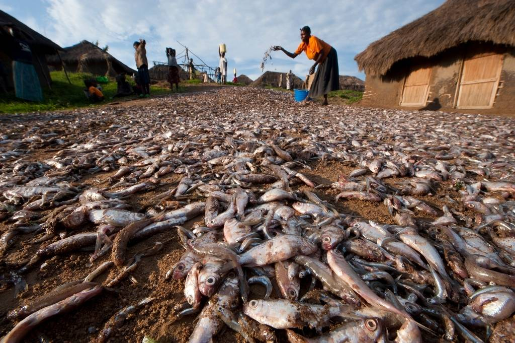 Photo: At the fishing village of Kyehoro, the locals catch tiny carpenter fish for food for themselves, and to sell as animal feed.