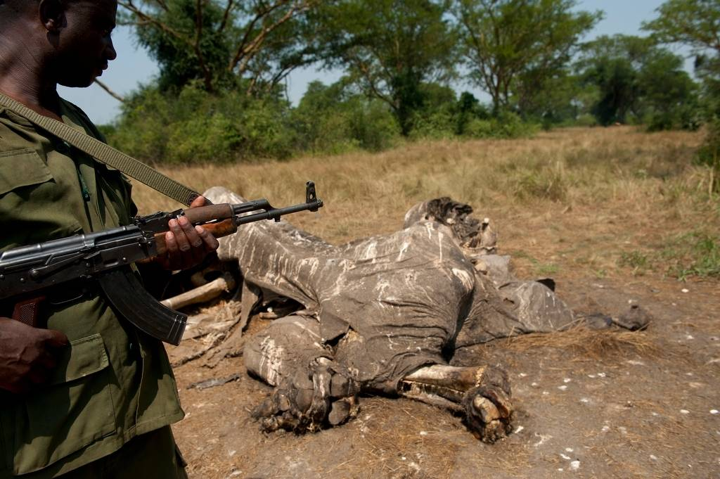 Photo: An elephant, poached not far from the ranger station well inside Queen Elizabeth National Park.