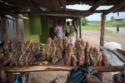 Photo: Dried tilapia at a roadside stand near the Kazinga Channel in Uganda, Africa.