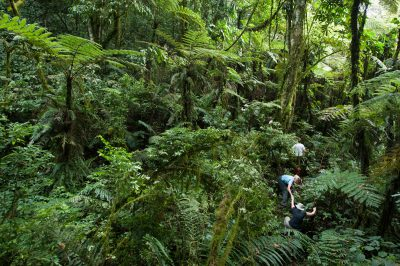 Tracking mountain gorillas in Bwindi Impenetrable Forest.