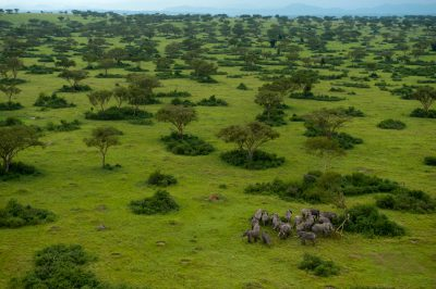Photo: An elephant herd on the plains of Queen Elizabeth National Park.