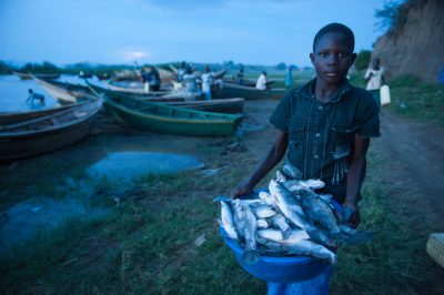 Photo: A local boy carries a bucket of Nile perch caught in Lake Albert.