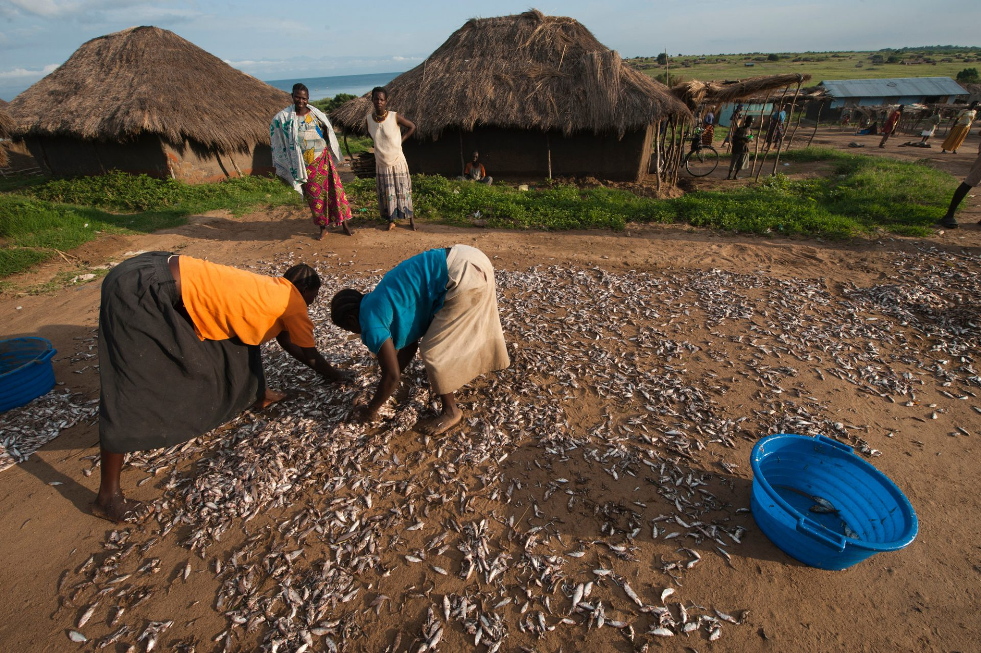 Photo: Locals dry carpenter fish in the sun to sell as animal feed.