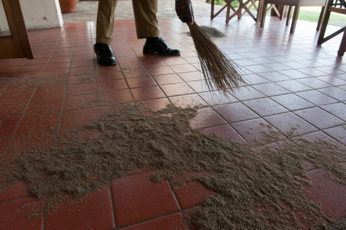 Photo: Workers sweep up lake flies that swarmed the lodge and died.