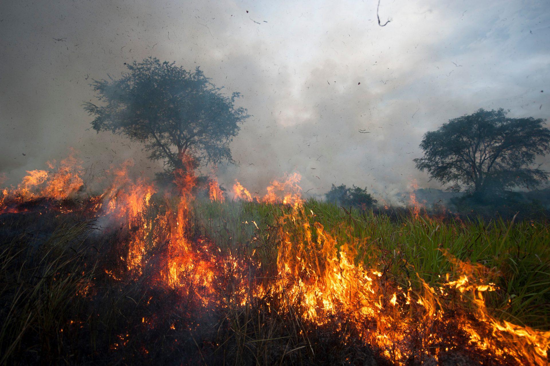 Photo: A fire burns out of control through the savanna.