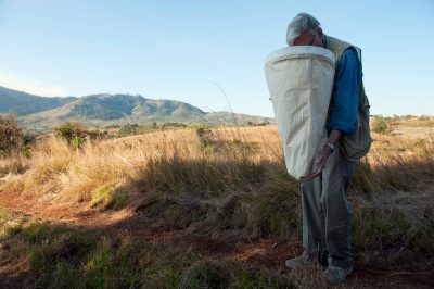 Photo: Scouting Mount Gorongosa in advance of the bioblitz, E. O. Wilson examines the insects caught in a net he swept through the grass.