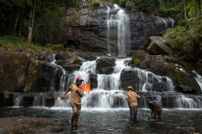 Photo: Local boys collect frogs and dragonflies around Murombodzi waterfall on Mount Gorongosa during a 2011 bioblitz- a two-hour sampling of its wildlife.