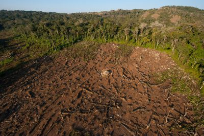 Photo: Clearcuts and forest along the top of the Mt. Gorongosa range in Gorongosa National Park in Mozambique, Africa.