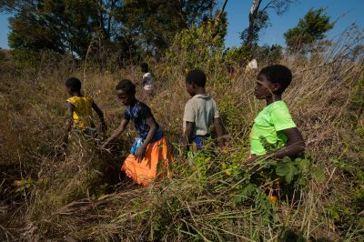 Photo: Dozens of children who live on Mount Gorongosa collect specimens for identification during a bioblitz.