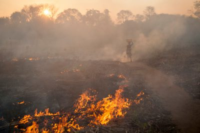Photo: Logging, fires and charcoal, are detrimental to the miambo woodland forest that comprises the 'buffer zone' between Gorongosa National Park and the Mt. Gorongosa range in Mozambique, Africa.