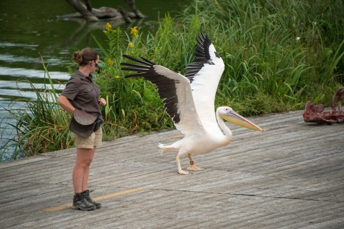 Photo: A staff member stands next to a stork at Le Parc des Oiseaux, a bird park in the town of Villars Les Dombes, France.