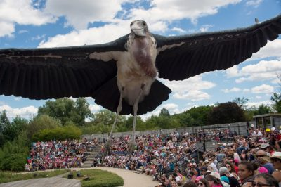Photo: A bird flies over a crowd at Le Parc des Oiseaux, a bird park in the town of Villars Les Dombes, France.