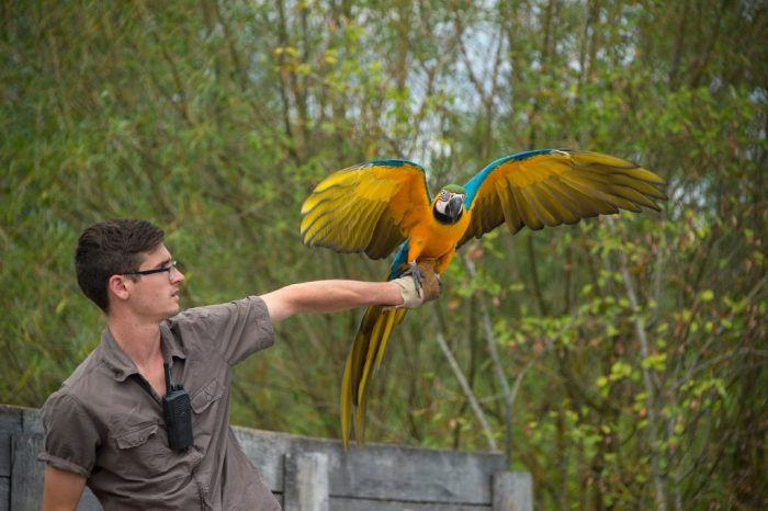 Photo: A parrot perches on the hand of a staff member at Le Parc des Oiseaux, a bird park in the town of Villars Les Dombes, France.