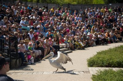Photo: A bird entertains a crowd at Le Parc des Oiseaux, a bird park in the town of Villars Les Dombes, France.