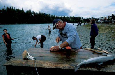 Photo: Preparing king salmon caught on the Kenai River in Alaska.