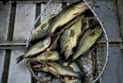 Photo: Bass in a fishing boat (Arma, KS.)