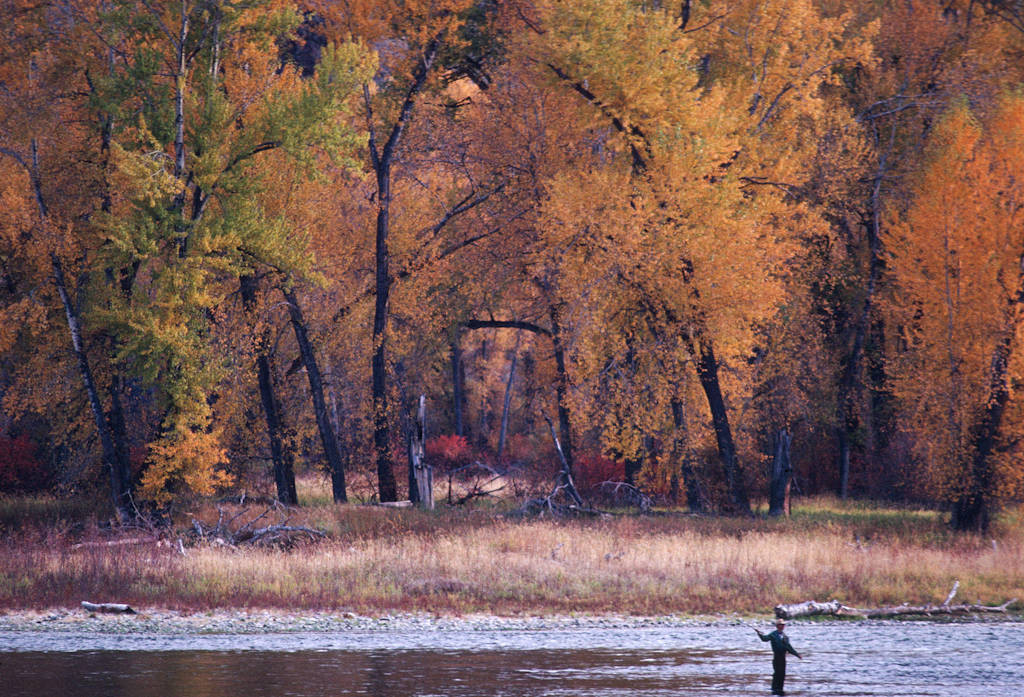 Photo: A man fishes amid fall color on the Salmon River in Idaho.