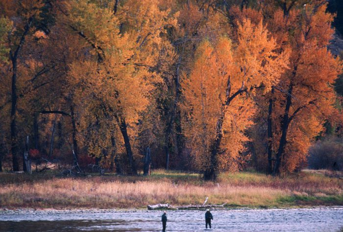 Photo: Two men fish amid fall color on the Salmon River in Idaho.