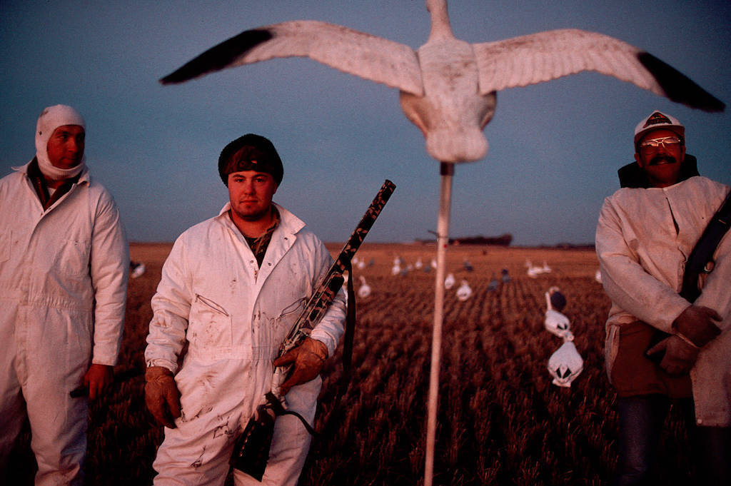 Photo: Hunters at the edge of J. Clark Salyer NWR in North Dakota use decoys to attract snow geese.