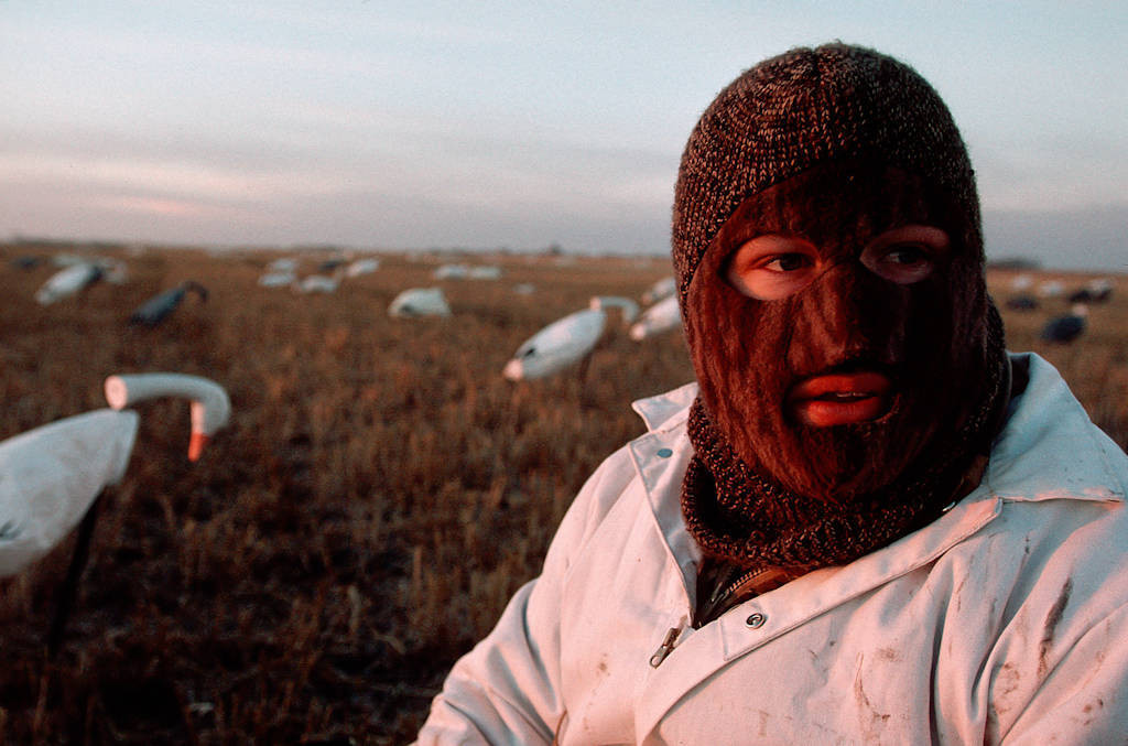 Photo: A hunter at the edge of J. Clark Salyer NWR in North Dakota uses decoys to attract snow geese.