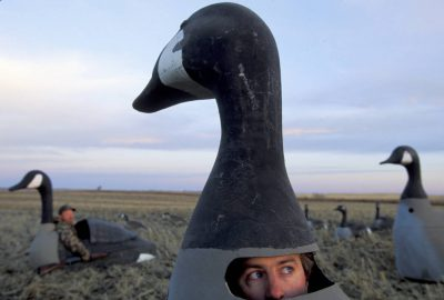 Photo: Canada goose hunters at Upper Souris NWR, ND, using giant decoys to attract game.