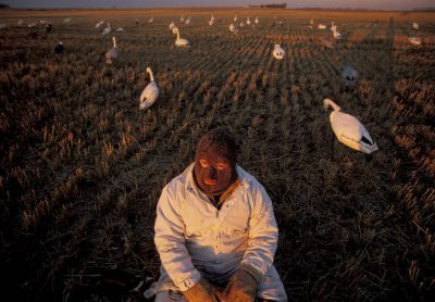 Photo: A hunter at the edge of J. Clark Salyer NWR in North Dakotauses decoys to attract snow geese.