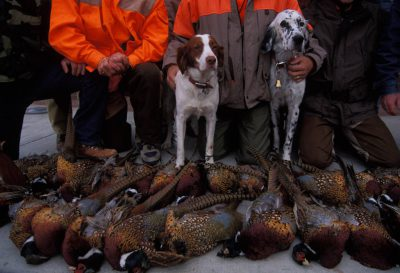 Photo: Dead pheasants are displayed together after an organized hunt in Broken Bow, Nebraska.