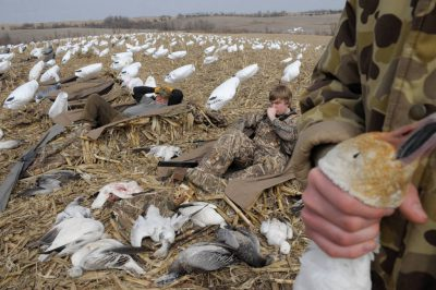 A conservation hunt for snow geese (Chen caerulescens) near Mount City, Missouri. This no-limit hunt is designed to try and reduced the number of snow geese, which are at or near record heights.