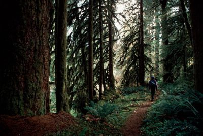 Photo: Hiker on a foot path in Wilamette Nat'l Forest (old growth) in Oregon.