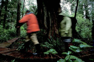 Photo: Hikers in old growth rainforest on Vancouver Island, British Columbia.