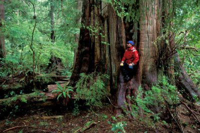Photo: Hiker in old growth rainforest on Vancouver Island, BritishColumbia.