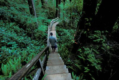 Photo: Hiker on a boardwalk trail through old growth rainforest along Clayoquot Sound, British Columbia.